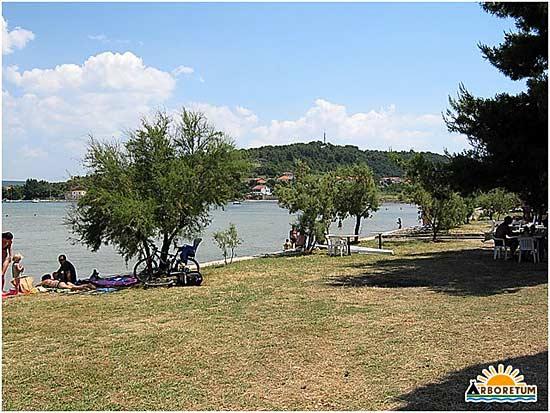 Camping Arboretum- Pasman Islnd, Croatia